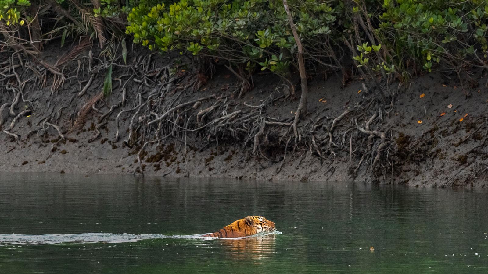 Sundarbans Wildlife Tour and Workshops