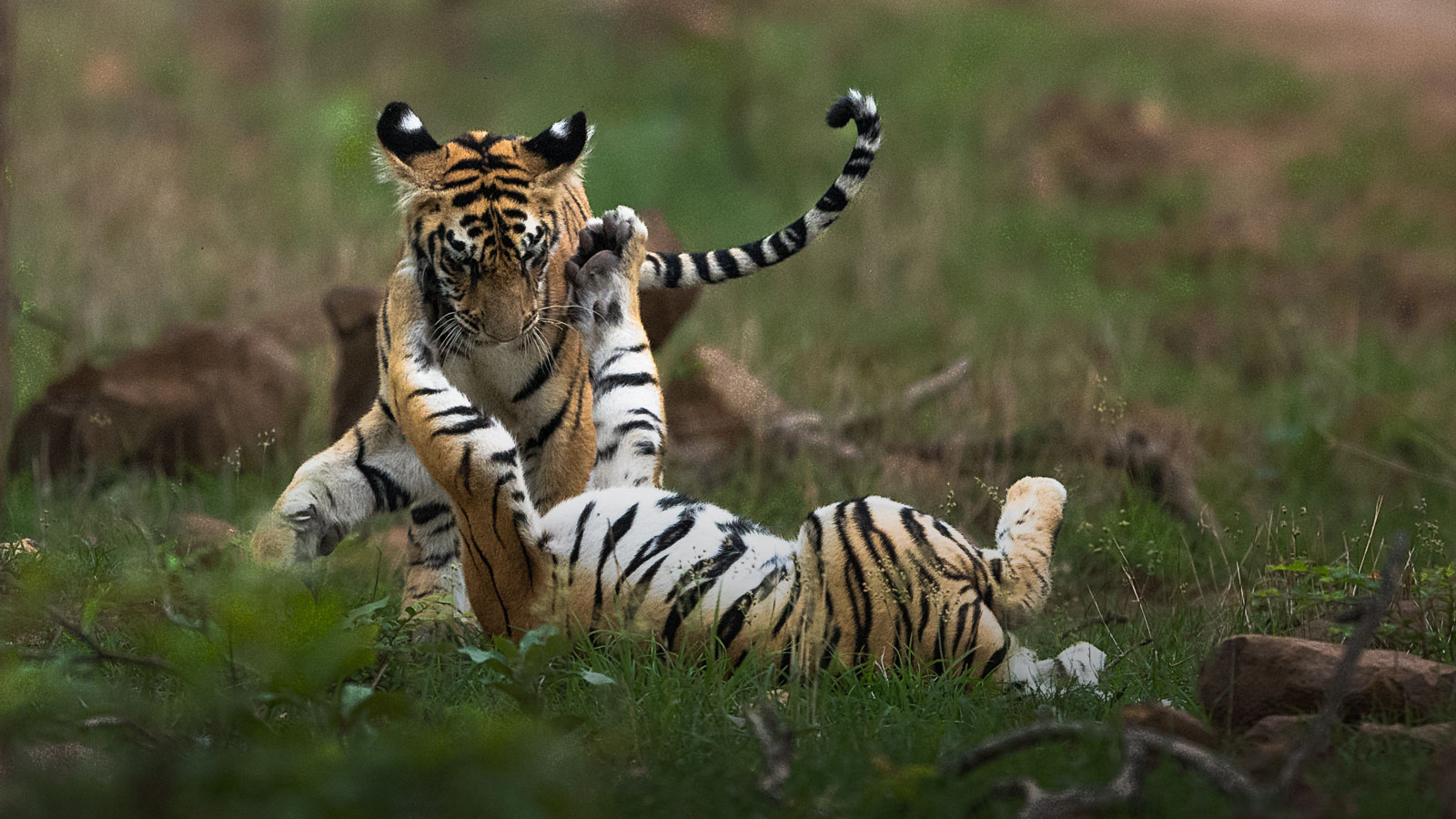 Tadoba Wildlife Tour and Workshops
