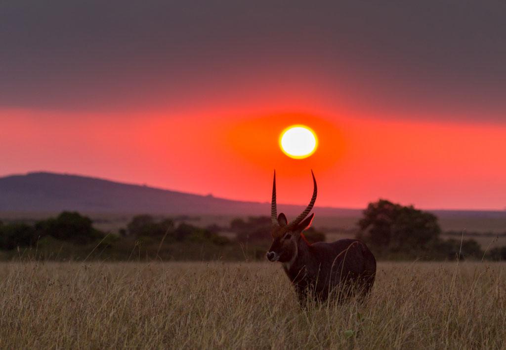 Masai Mara 01