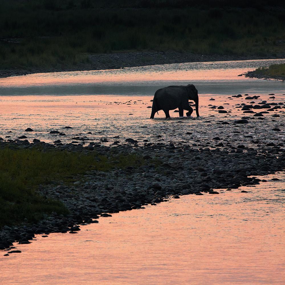 Green Cap Safari